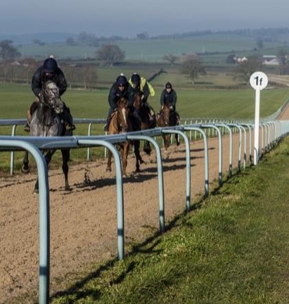 Owner_watching_horses1_(2).jpg