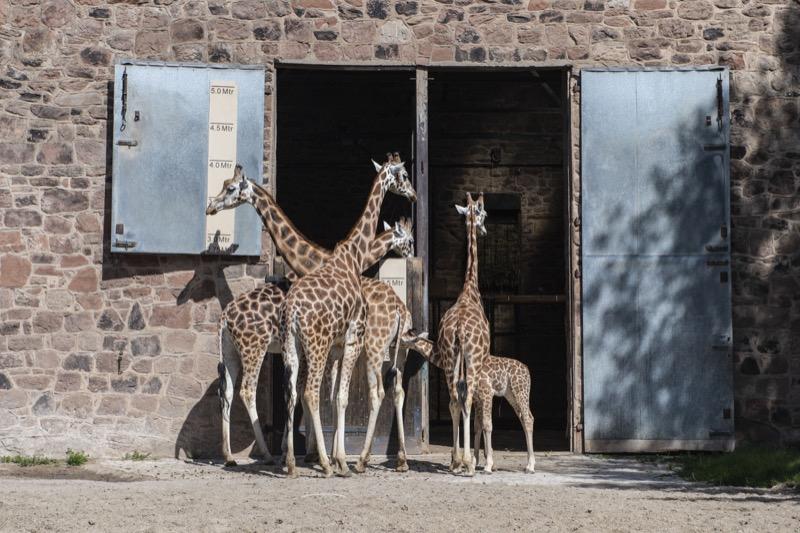 Jamie @ chester Zoo012.jpg