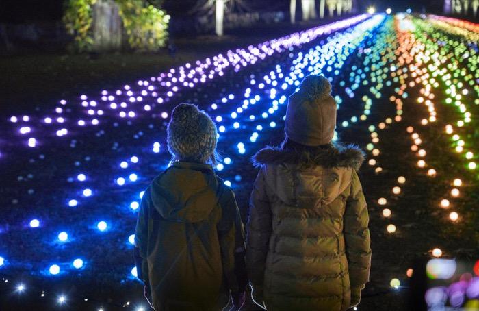 Children admiring Field of Light at Dunham Massey Christmas[1][2][1][1][1].jpg