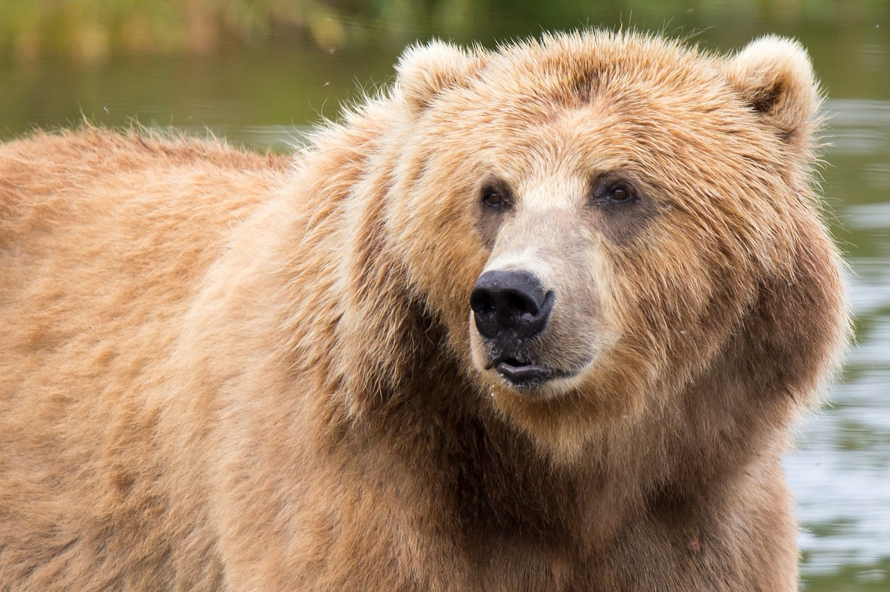 While the cost-of-living and total household credit card debt in Alaska can be a   'bear'   to deal with, Money Fit has excellent personal finance services that can help.