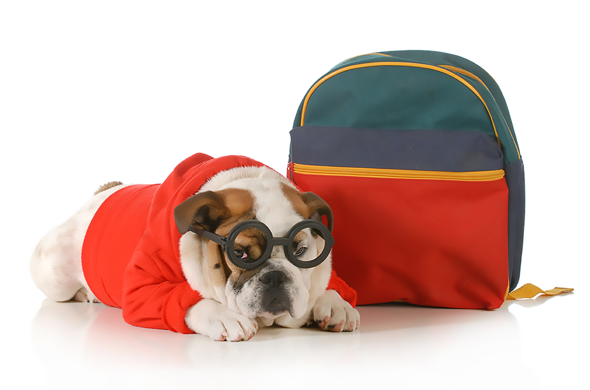Cleanliness, comfort and happiness are hallmarks of our dog boarding service.