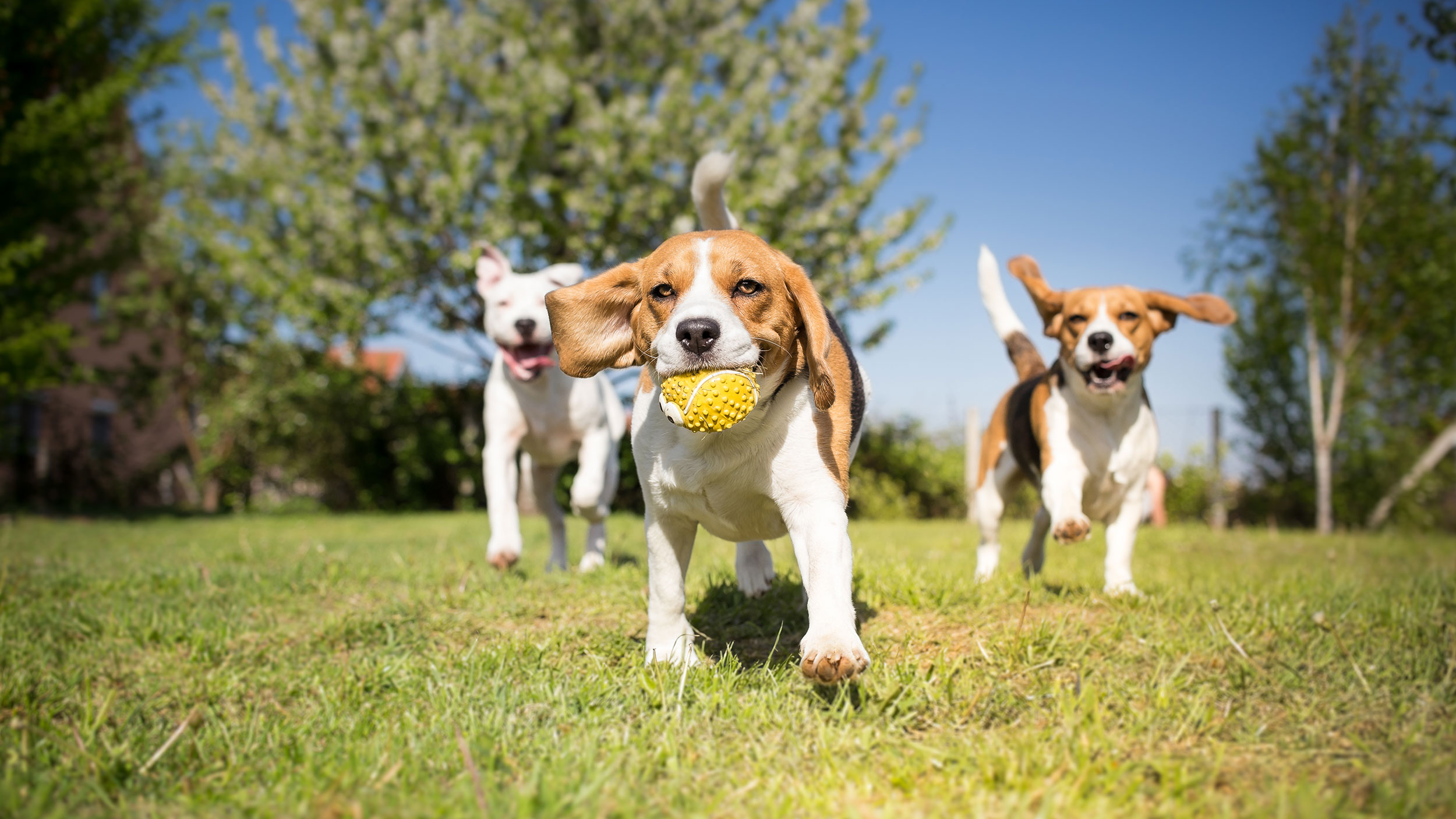 Healthy and comfortable kennels make happy dogs in our dog boarding service.