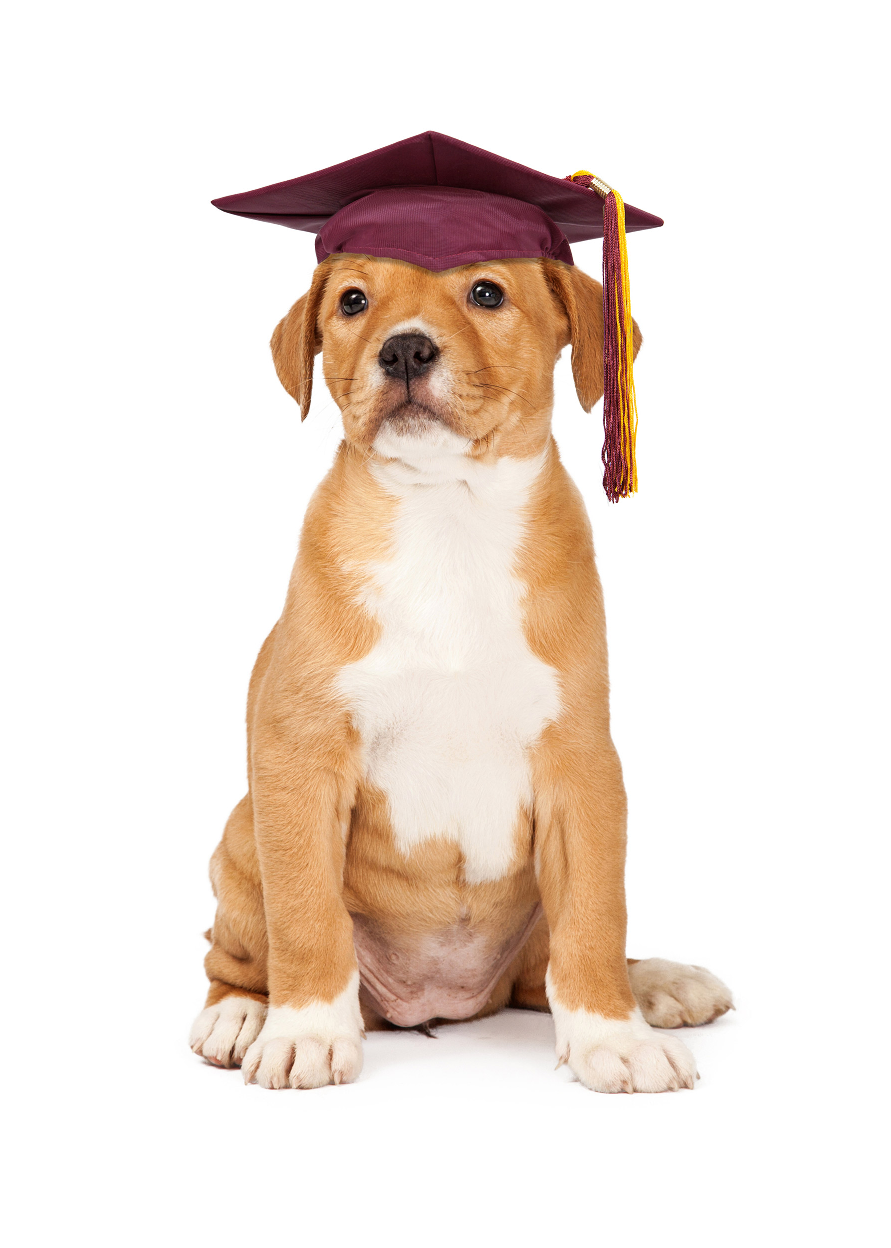 Our obedience training for puppies and adult dogs produces smart and good looking graduates.