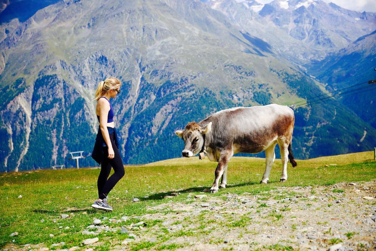 AUSTRIA-Cow2.jpg