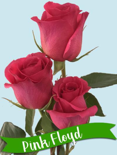 pinkfloyd-400x533.jpg