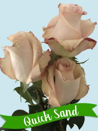 quick-sand-01-400x533.jpg
