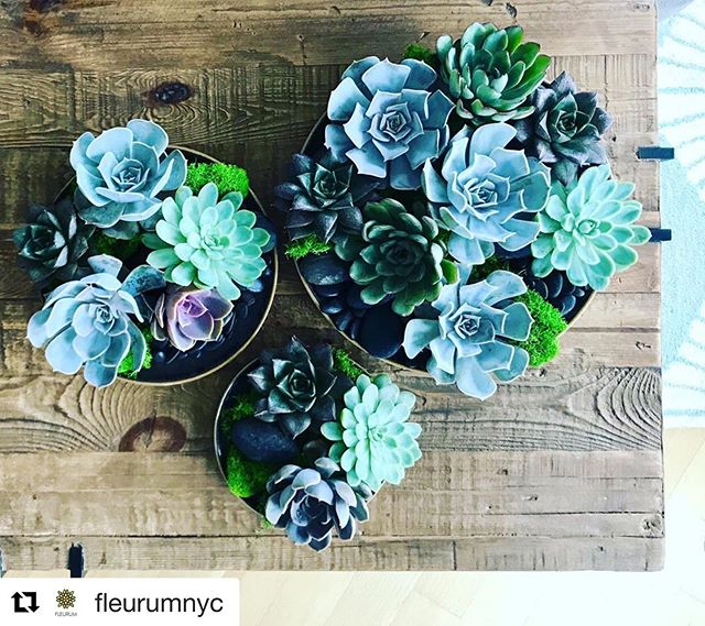 Sensational Succulents!!! Special design done by the talented @fleurumnyc  Thank you for your continuous support! #guatemalasucculents #availablenow #customerfamily