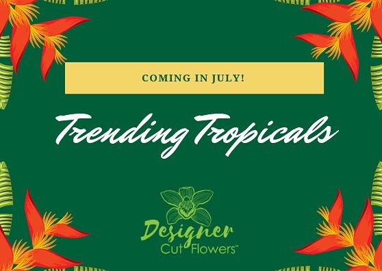 We're expanding our tropical portfolio with a new line of exotic tropicals from our quality growers. 🌴🌴🌴🌴🌴 More info coming soon! #trendingtropicals  #tropicalnouveau #qualityfirst