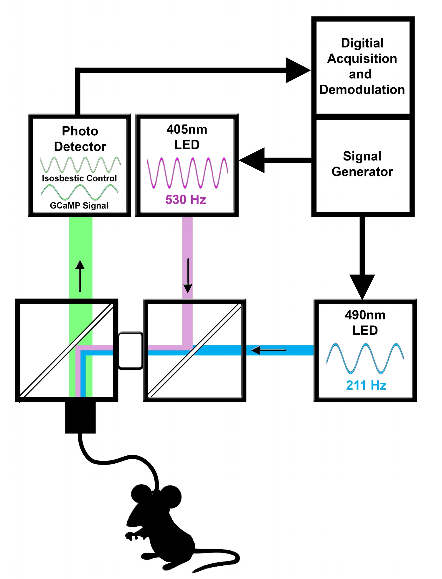 GCAMP Flow Diagram.jpg