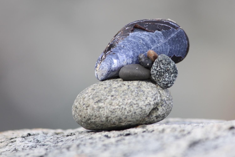 Blue mussel perched on rock _web.jpg