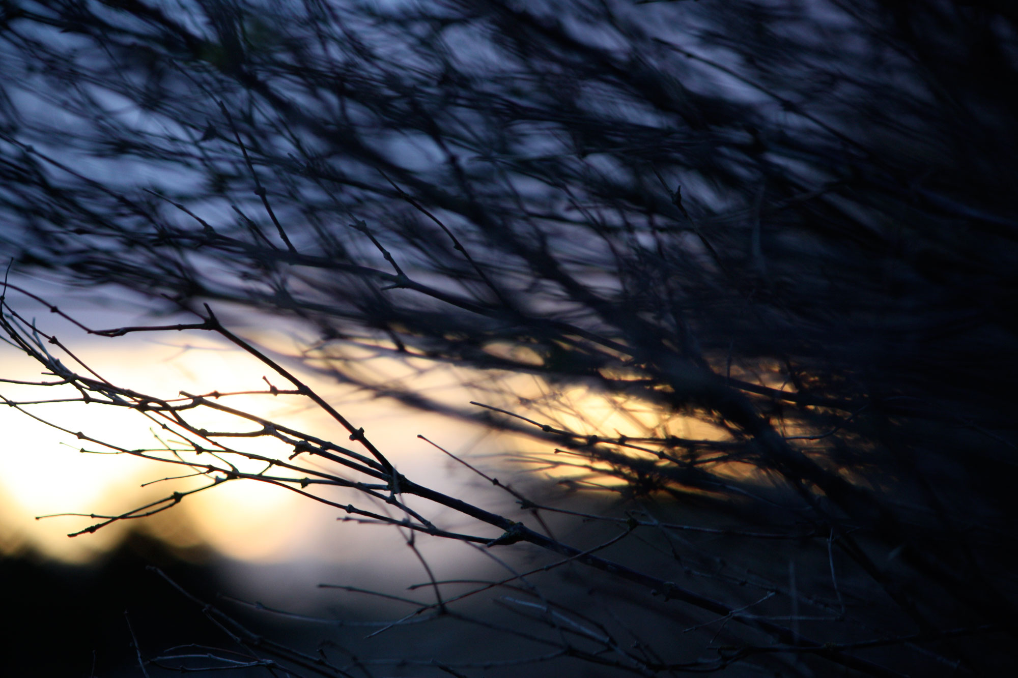 Cool-Blue-Evening-Light-Branches_web.jpg