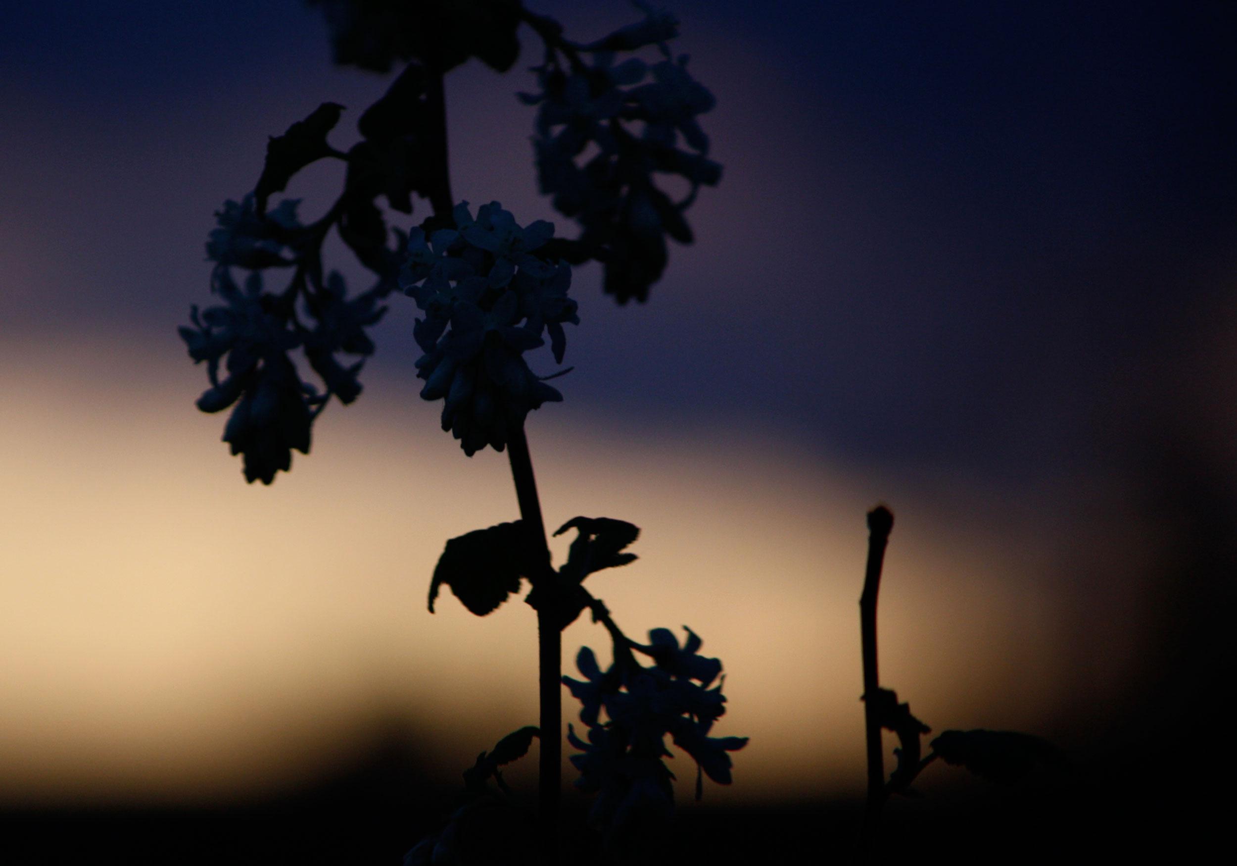 Cool-Blue-Evening-Light-Silhouette-1_web.jpg