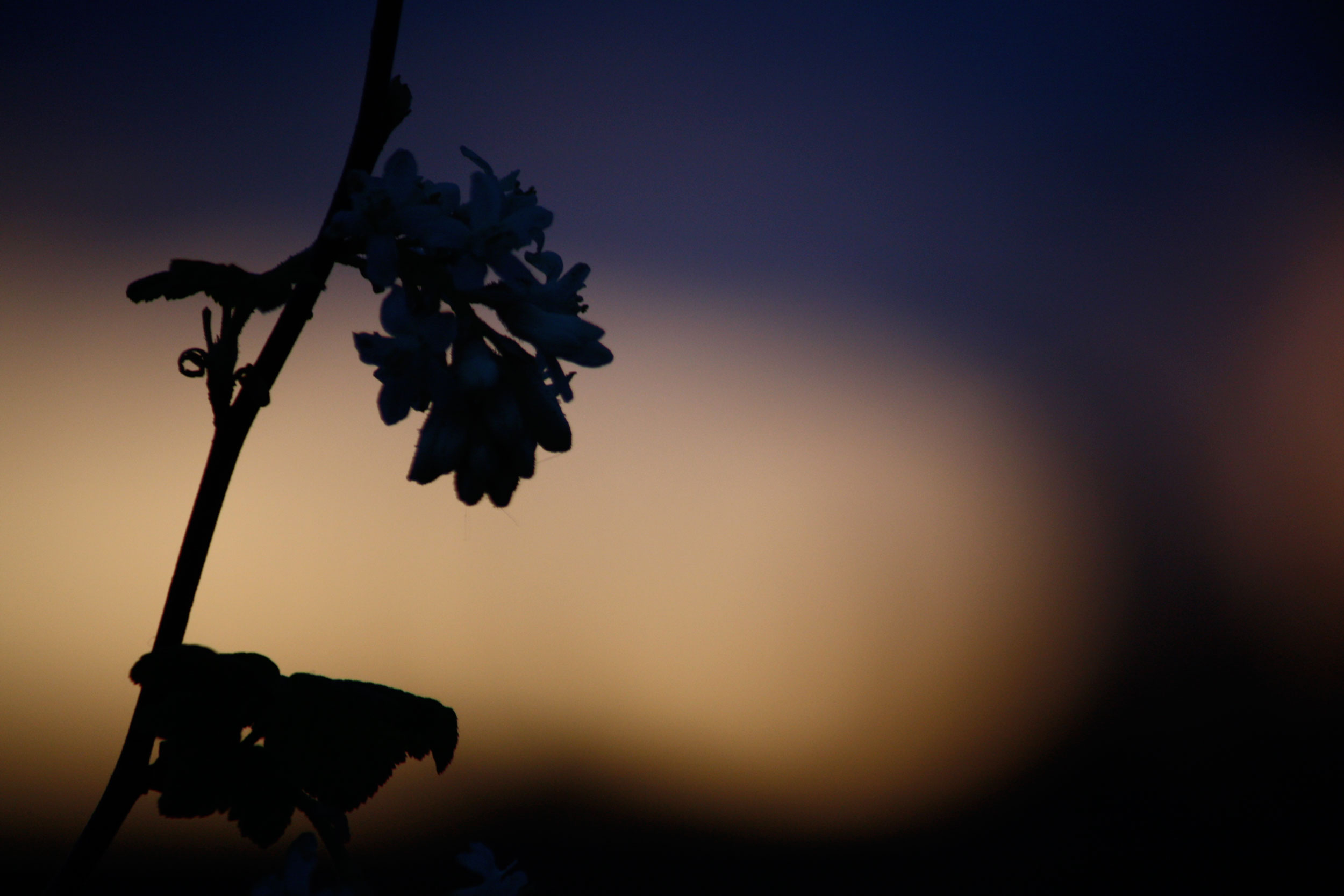 Cool-Blue-Evening-Light-Silhouette-2_web.jpg