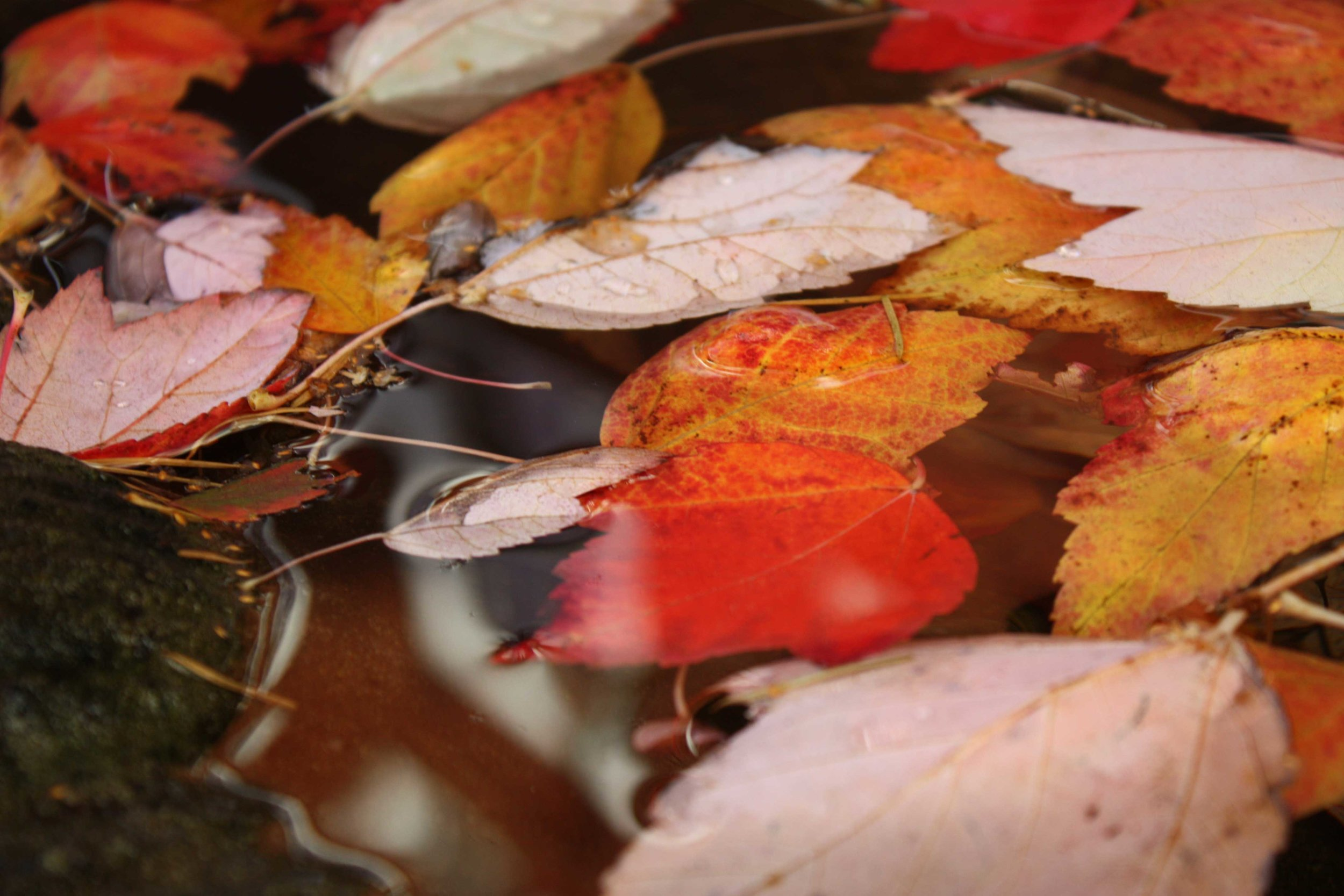 Autumn-leaves-in-fountain_web.jpg
