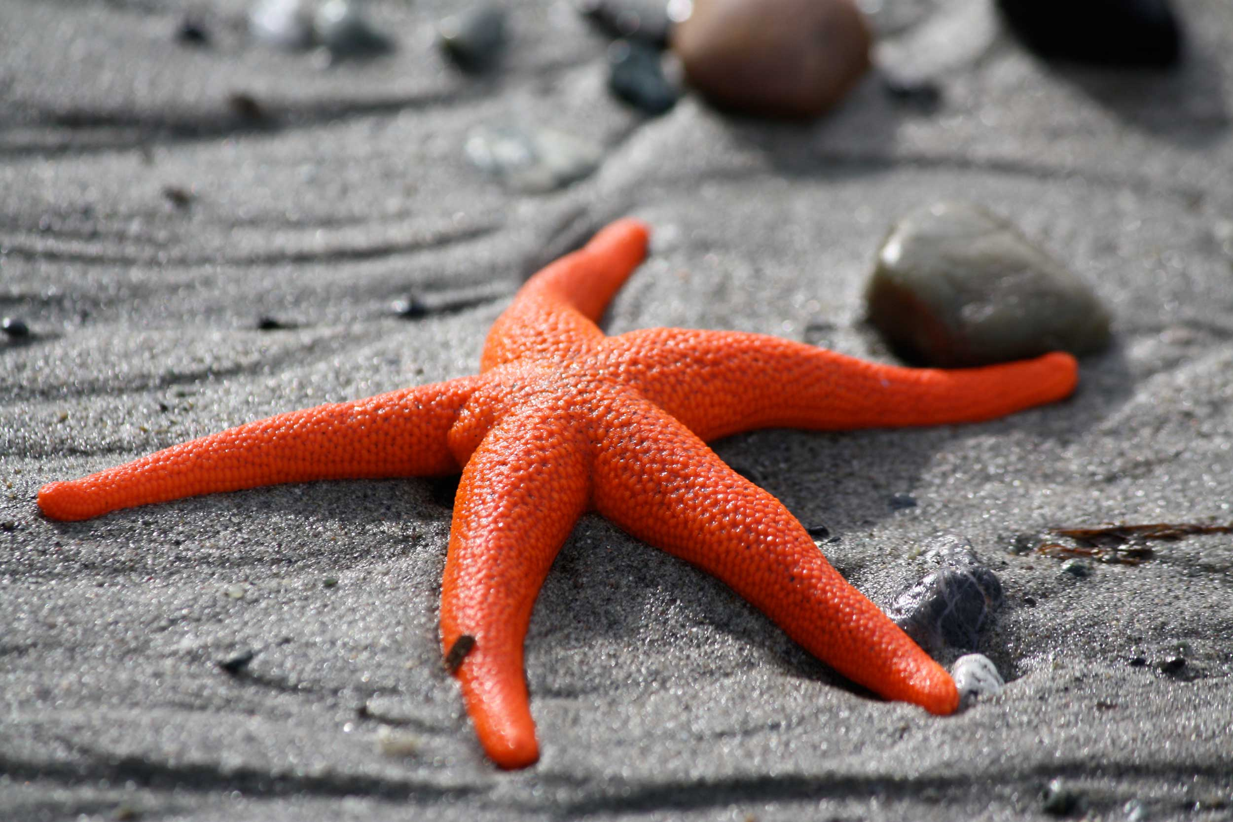 Orange-Starfish_web.jpg