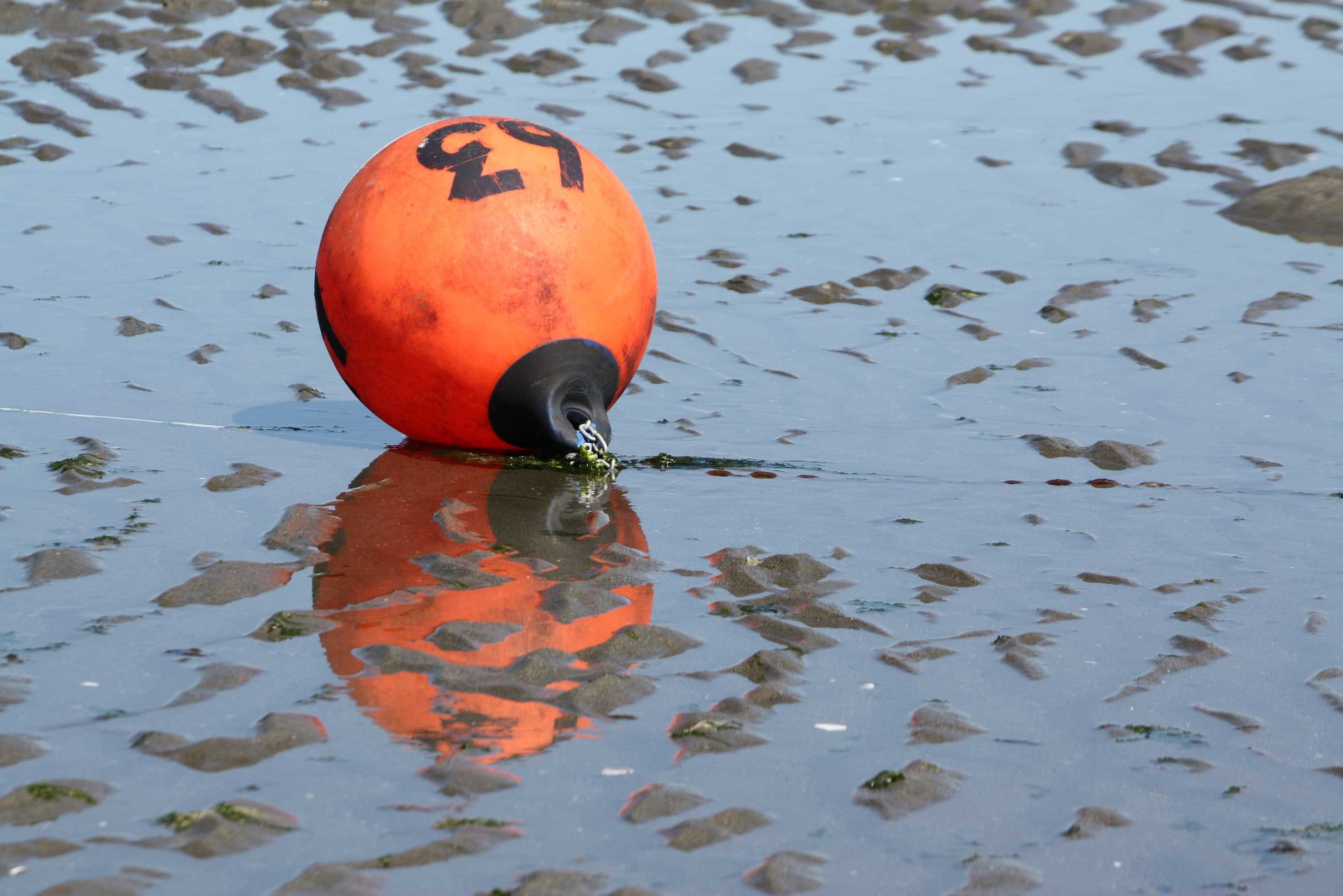 Orange-buoy-on-wet-sand_web.jpg