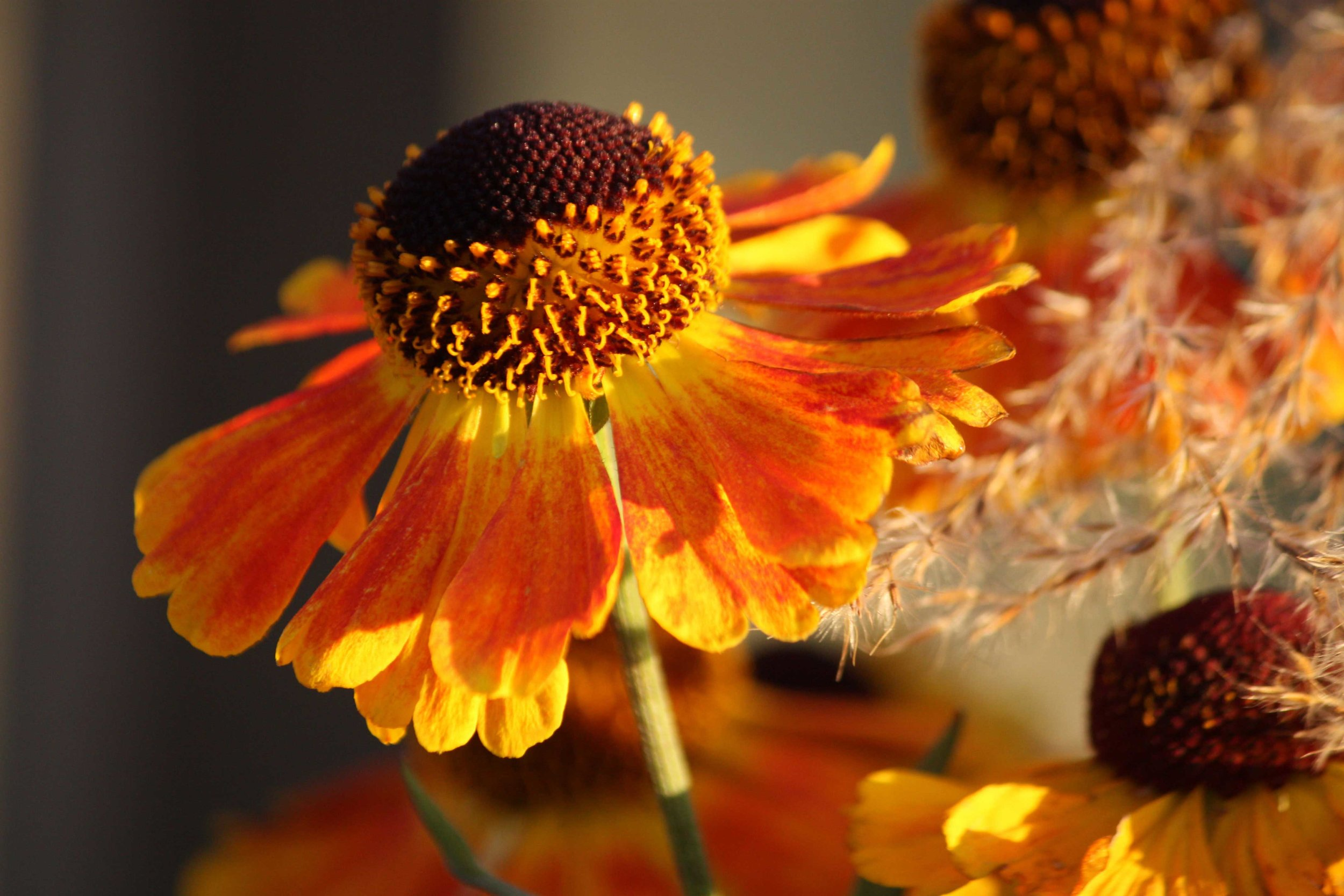 114_Orange-ConeFlower_rgb_opt_web.jpg