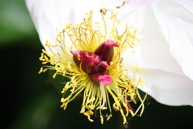 yellow flower center web.jpeg