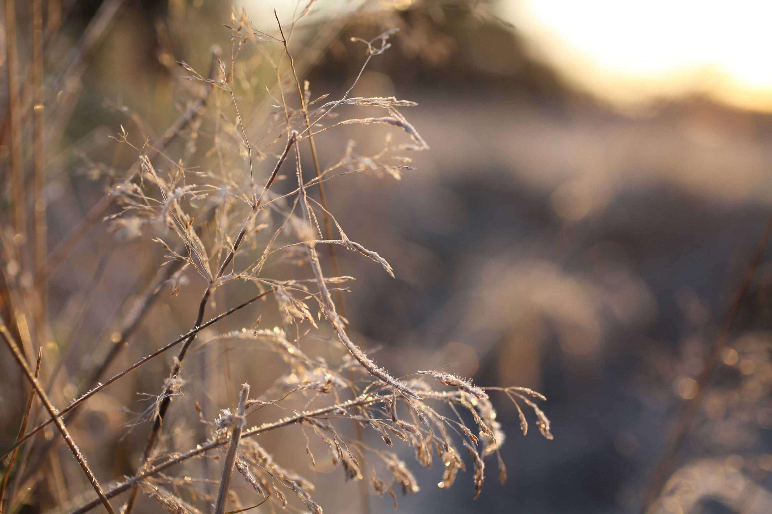 138_Neutral-Frosty-Grass_rgb_opt_web.jpg