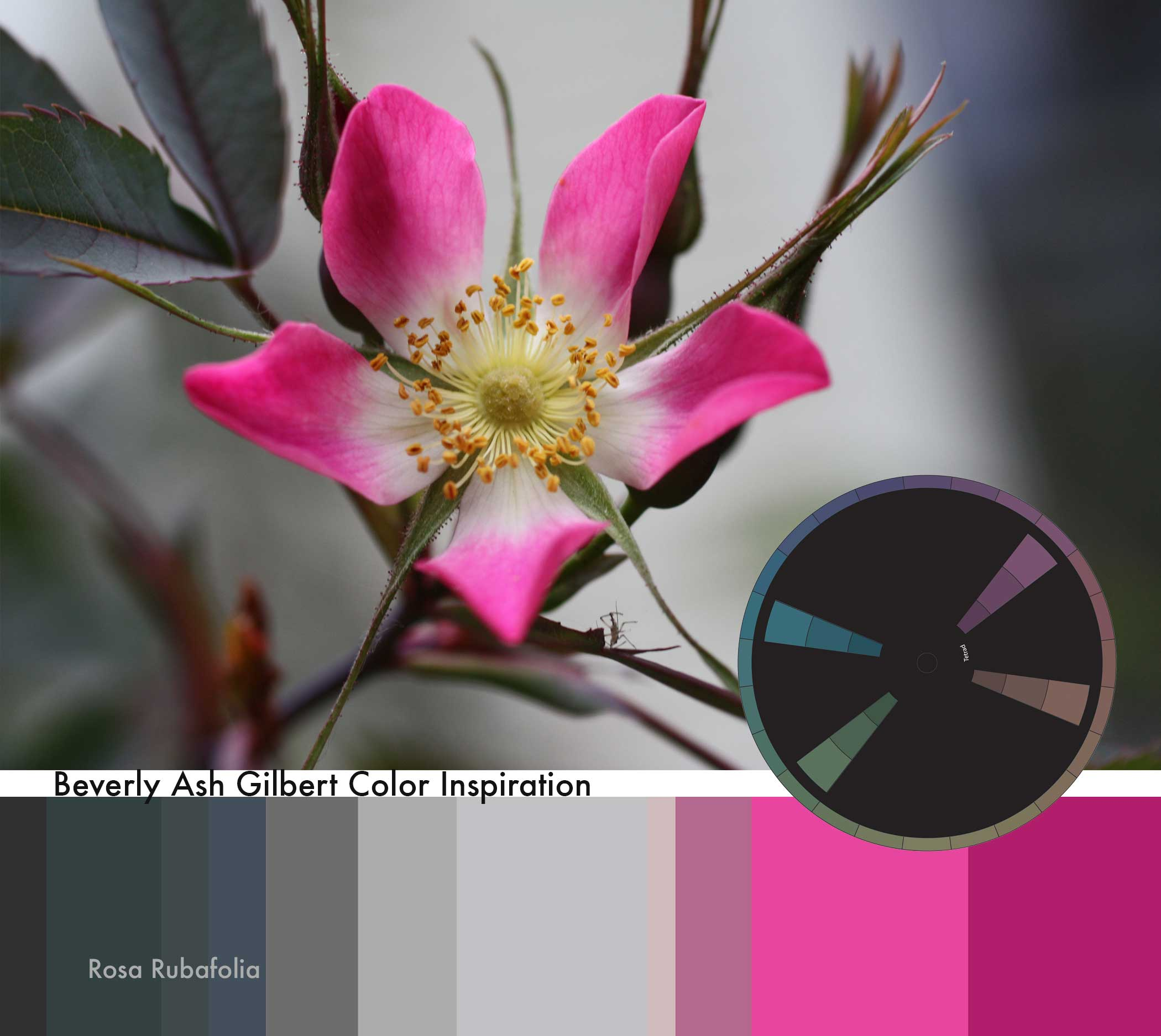 ColorInspiration_RosaRubafolia_small.jpg