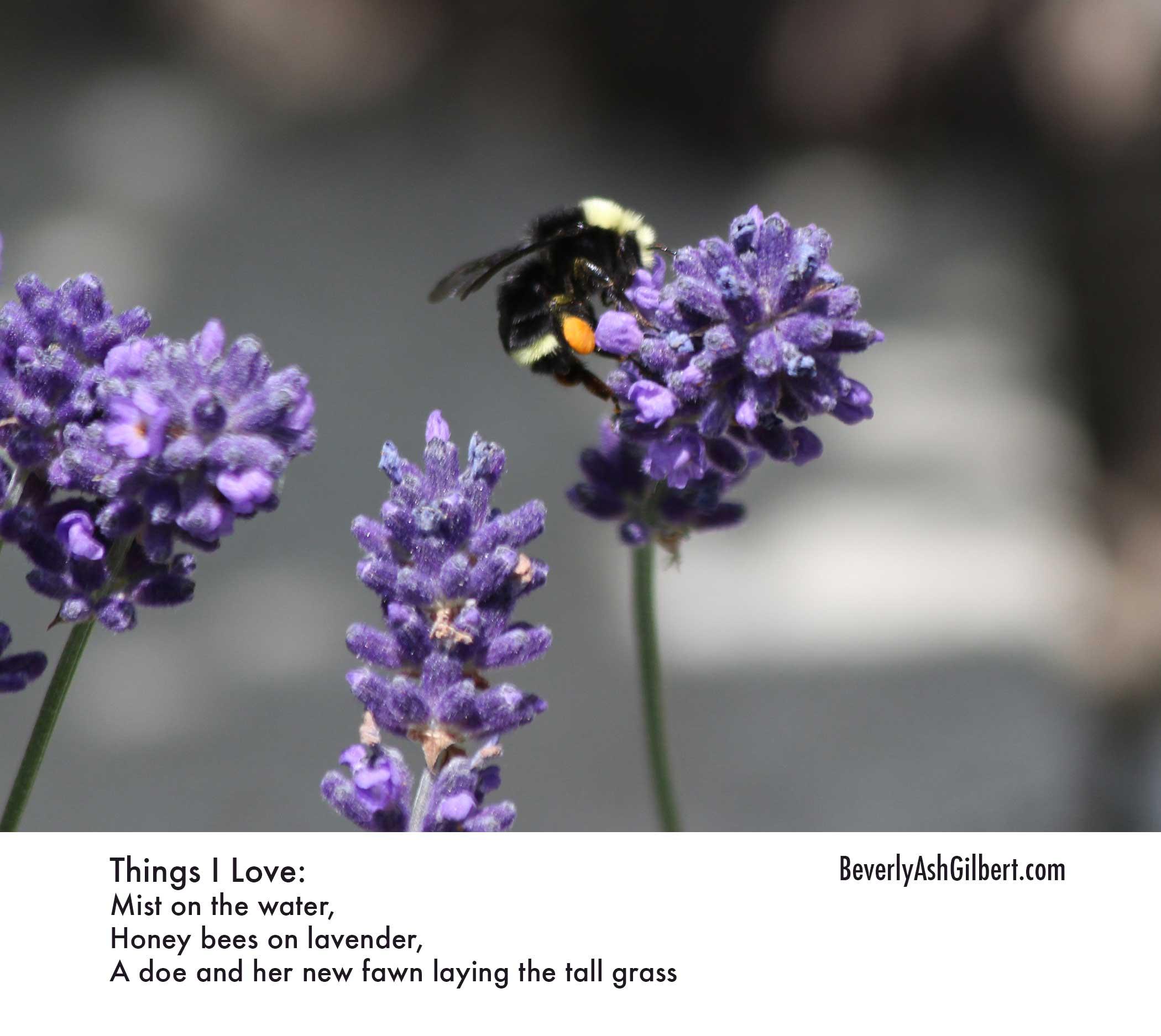 ThingsILove_BeeLavender.jpg
