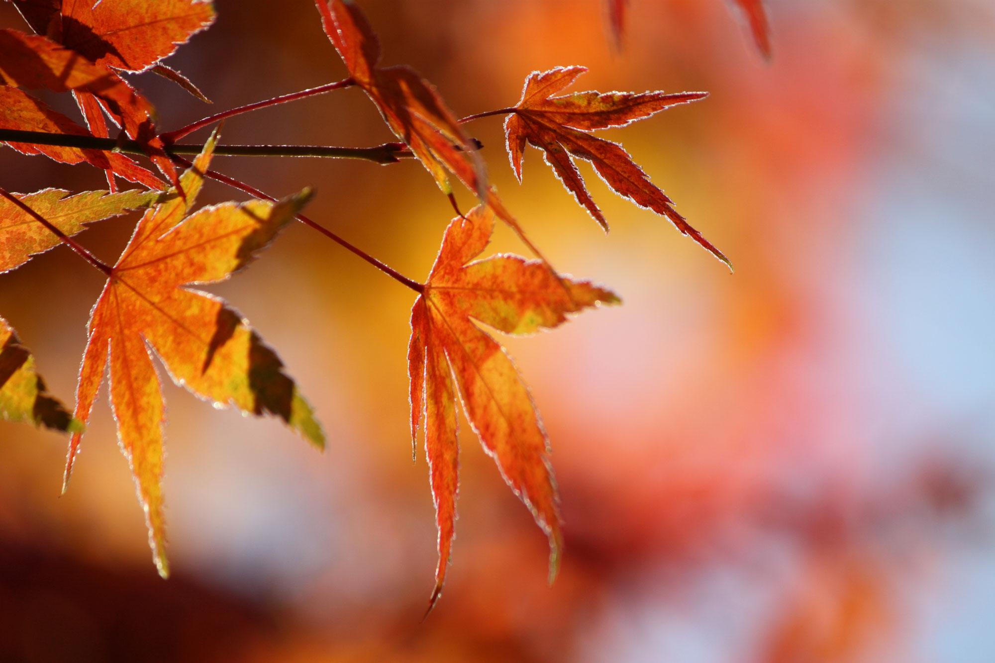 LeafwithFrost.jpg
