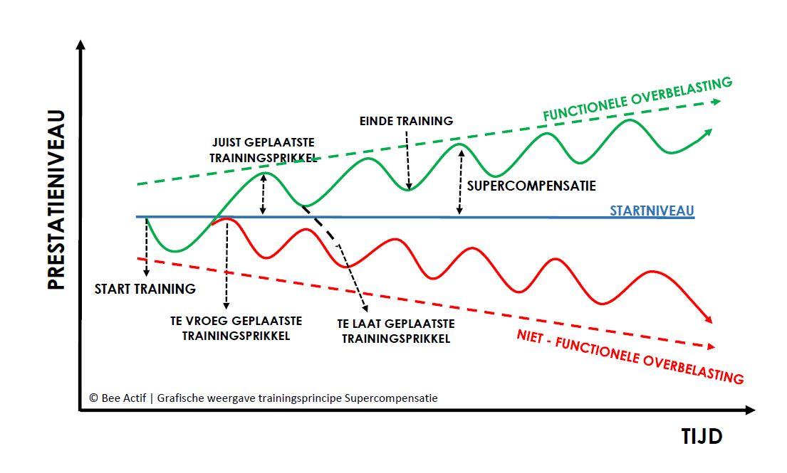 © Bee Actif | Grafische weergave trainingsprincipe Supercompensatie