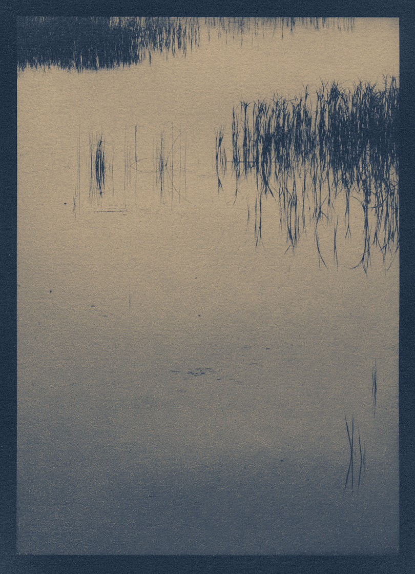 nahant_black_tea_toned_cyanotype 1039 copy.jpg