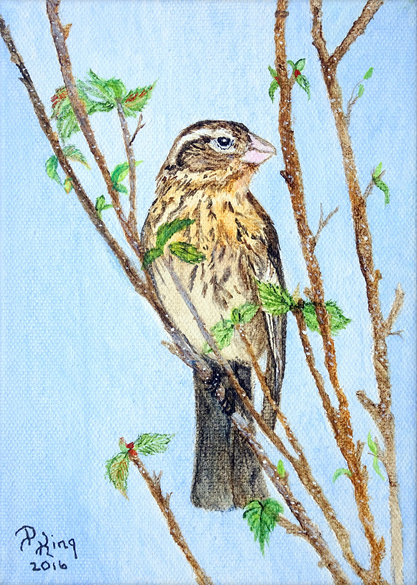 """""""GROSBEAK - FEMALE"""",  Watercolor, Wrapped Canvas,  5x7x1.25 inches,  $75"""