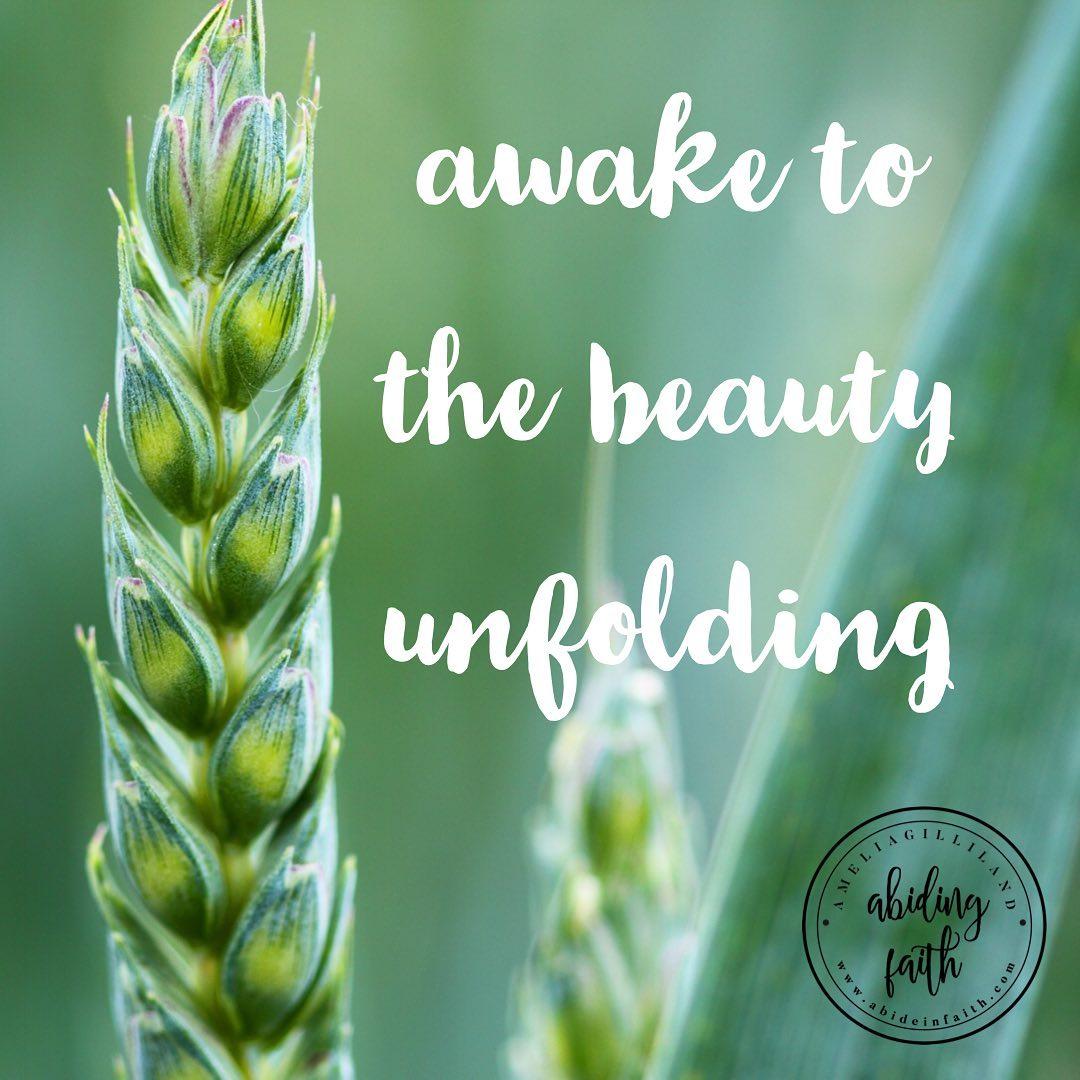 beauty of unfolding.jpg