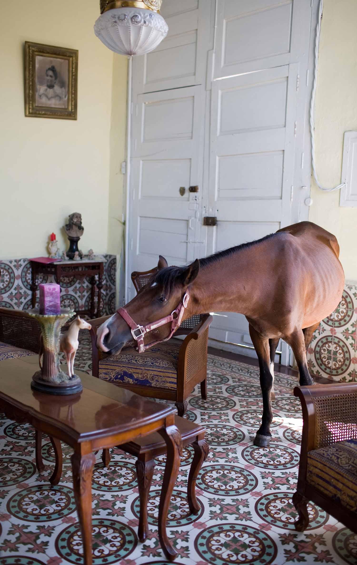 horse in home, Trinidad, Cuba.jpg