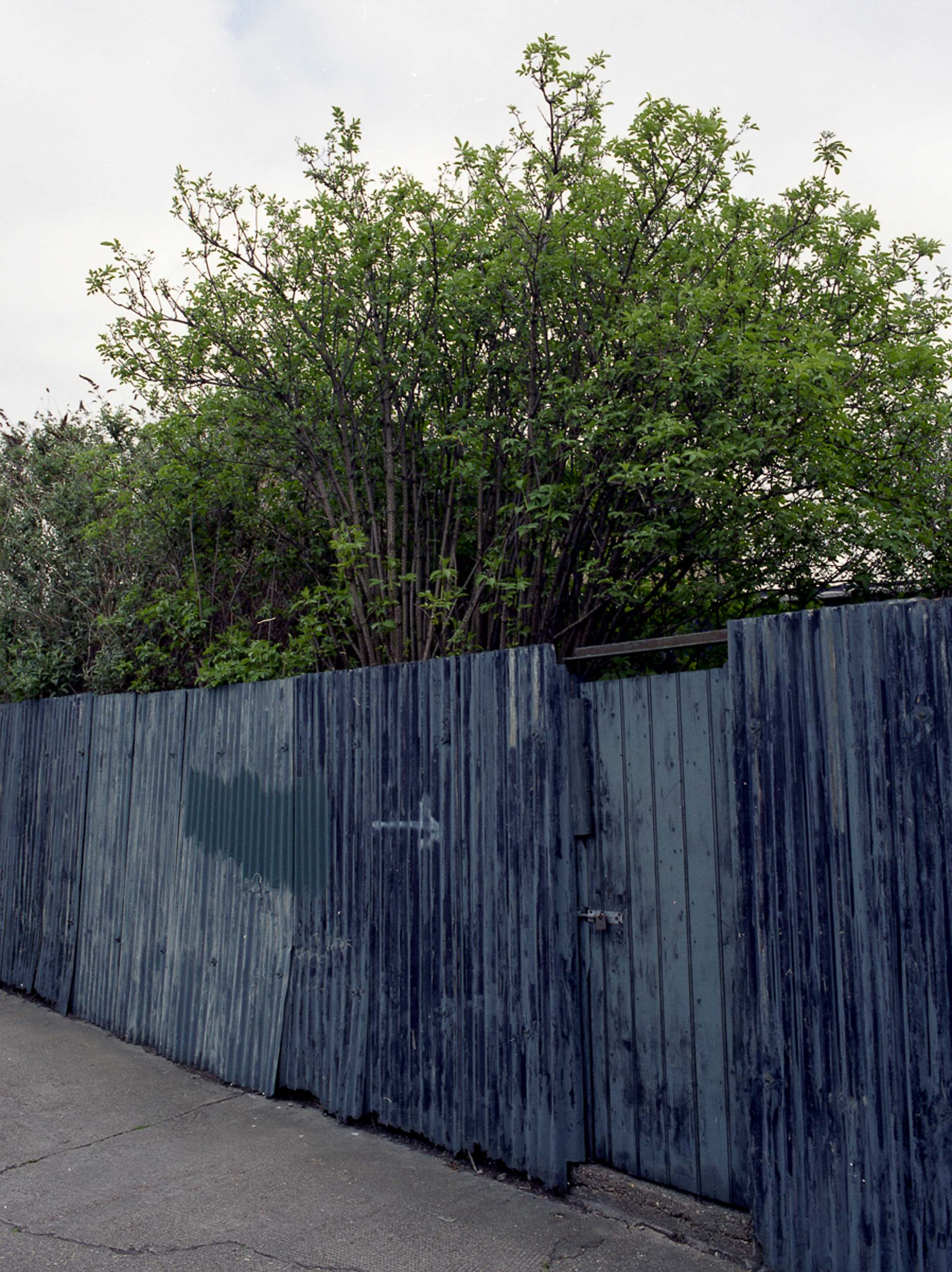 through the fences-84.jpg