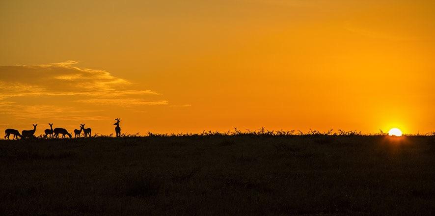 Whitetail on the Plains.jpg