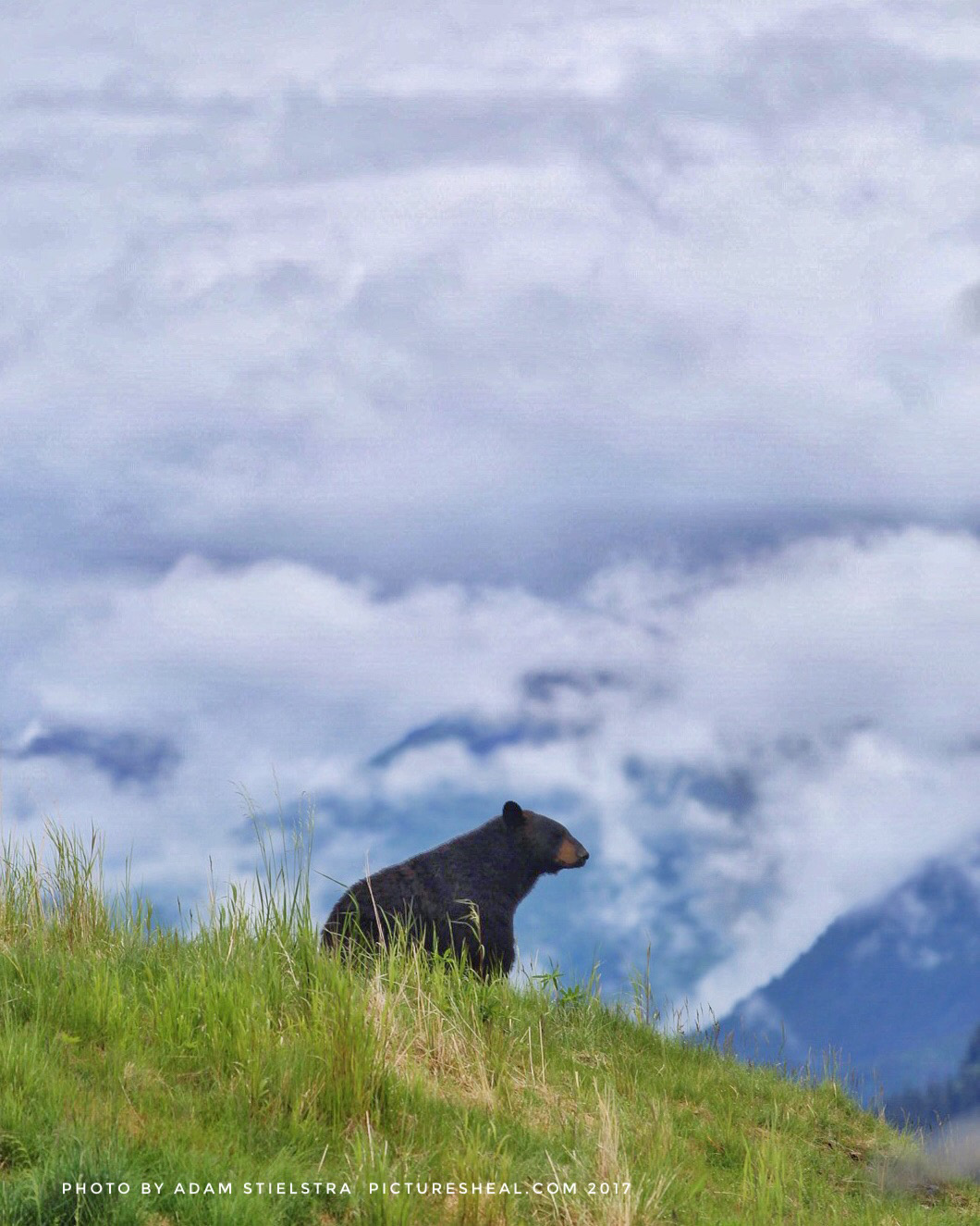 Black Bear Matches Mountains.jpg