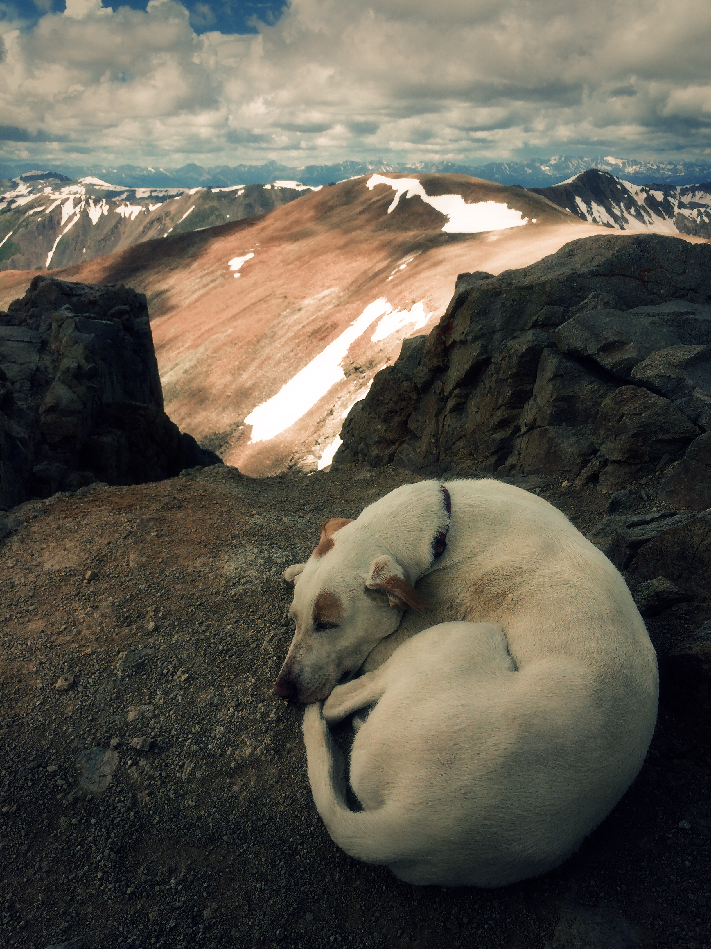 Summit Pup.JPG