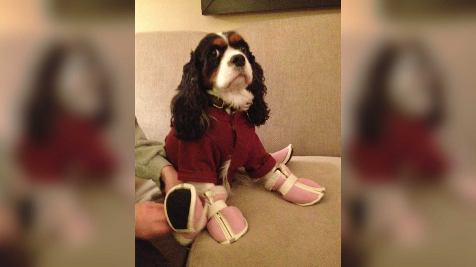 Breaking-News--Dog-Wears-Boots.jpg