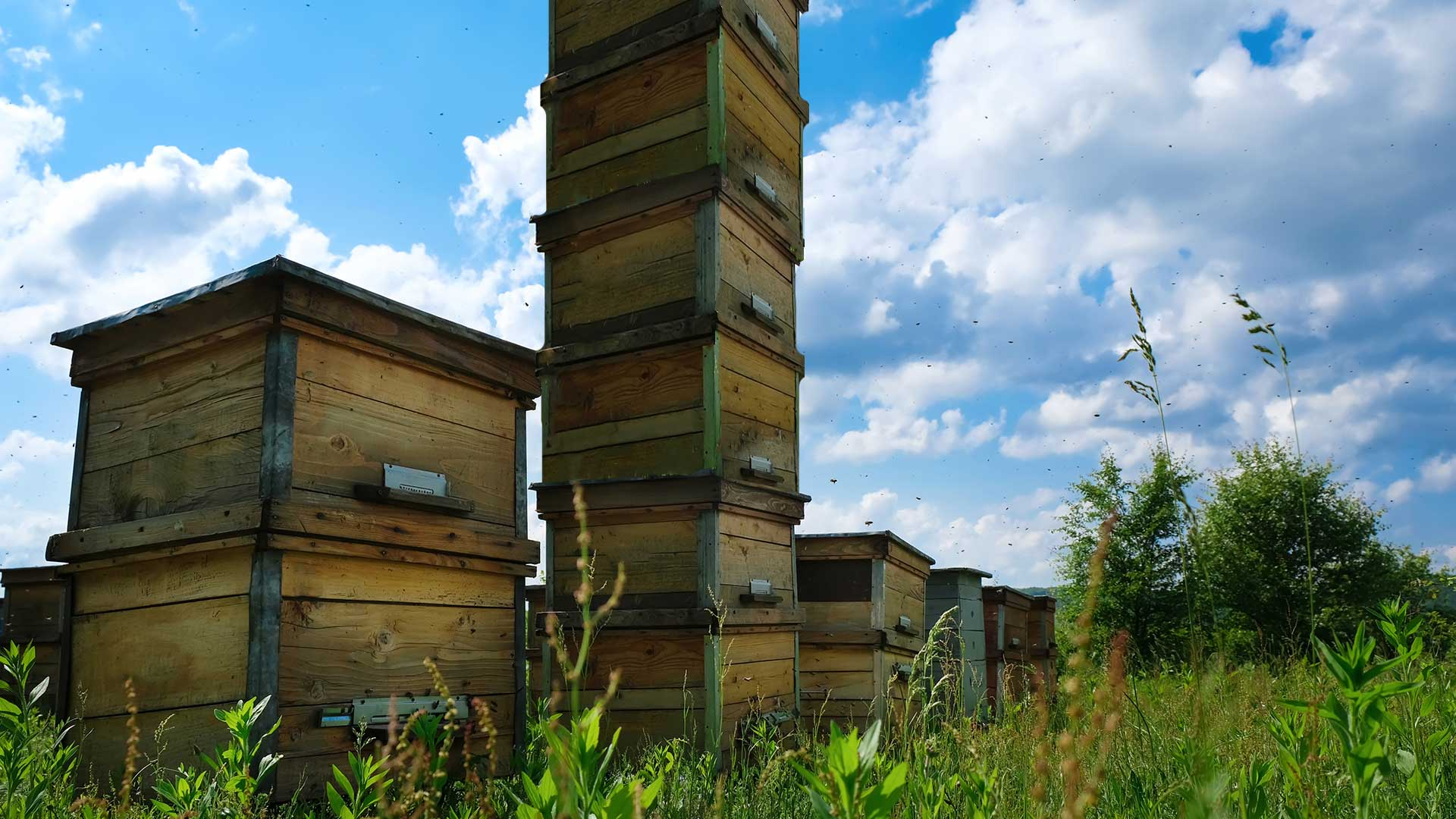 Como-Park-Bee-Skyrise-Sparks-Fears-of-Hive-Gentrification.jpg