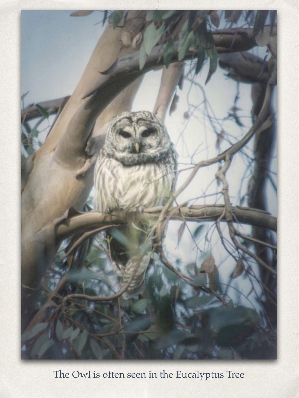 06 - The Owl.jpg