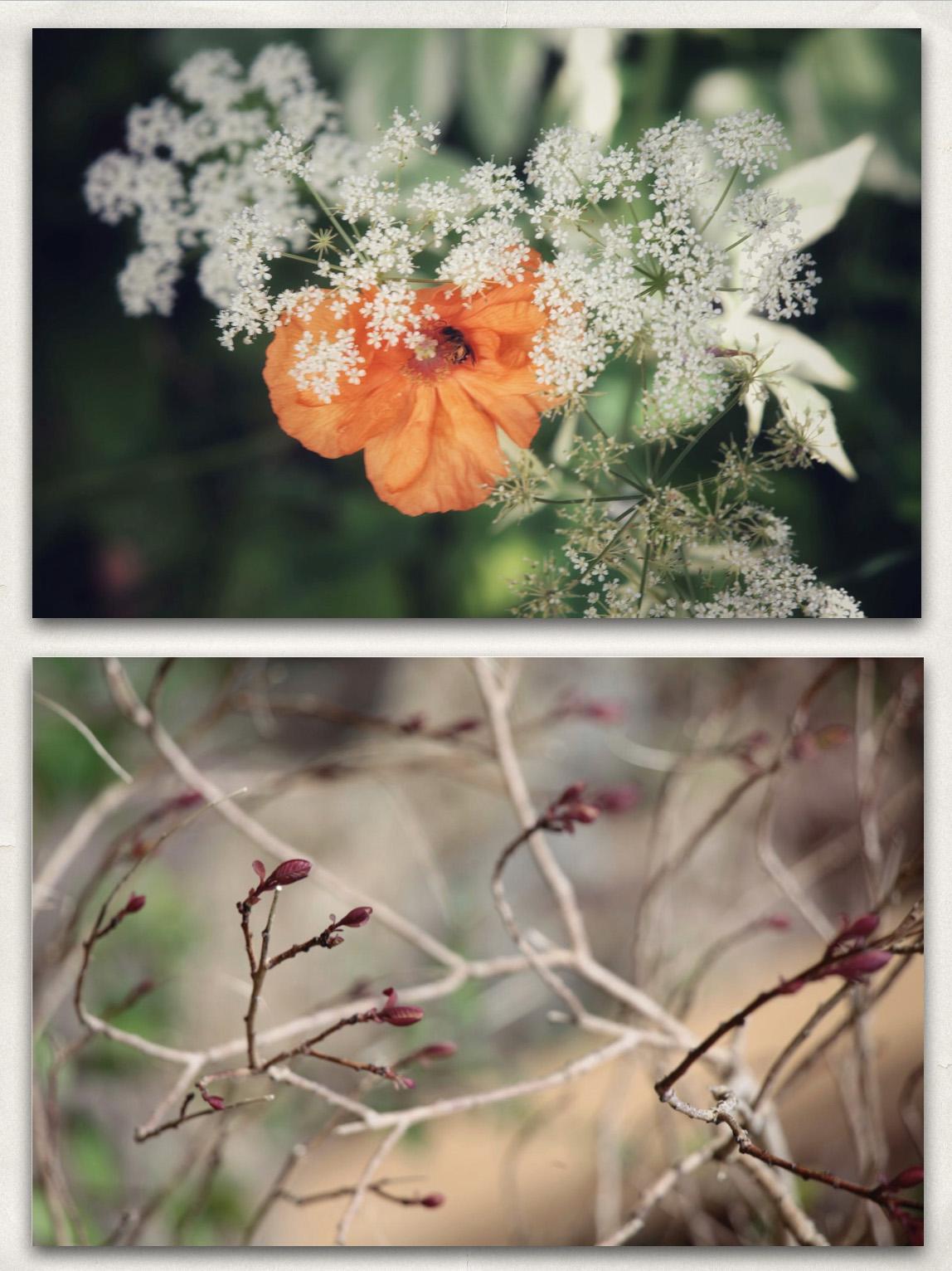 23 - Plants-b.jpg