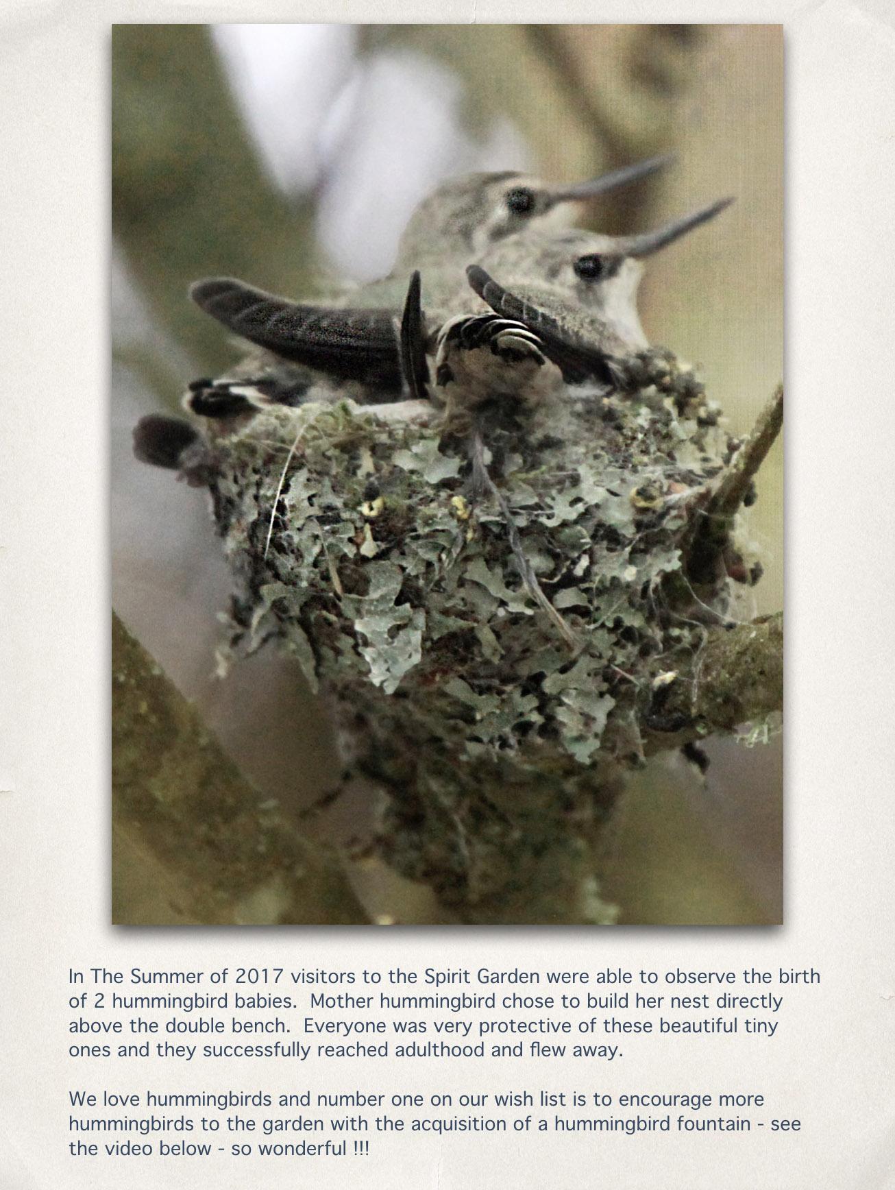 Hummingbird Babies.jpg