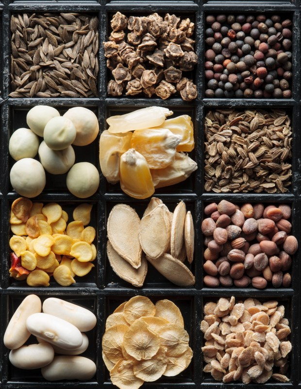 seedsaving_staver_005.jpg