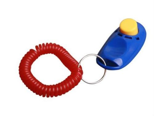 clicker-trainer-in-charleston