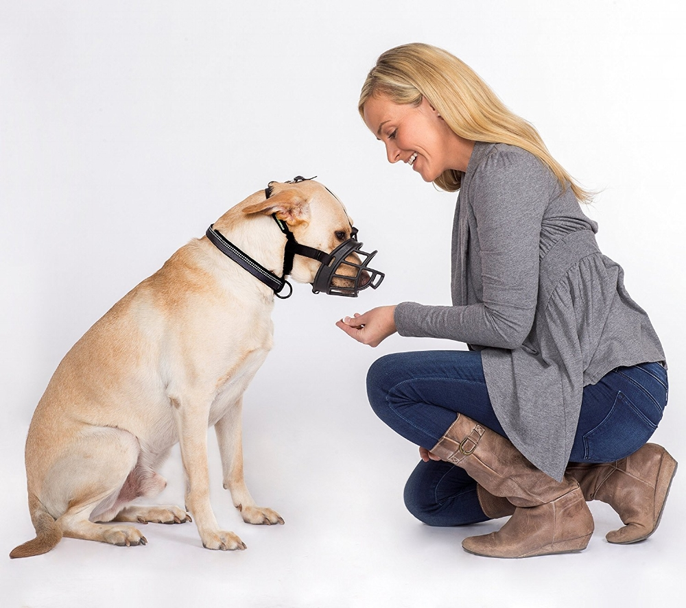 Tools for Reactive Dogs -