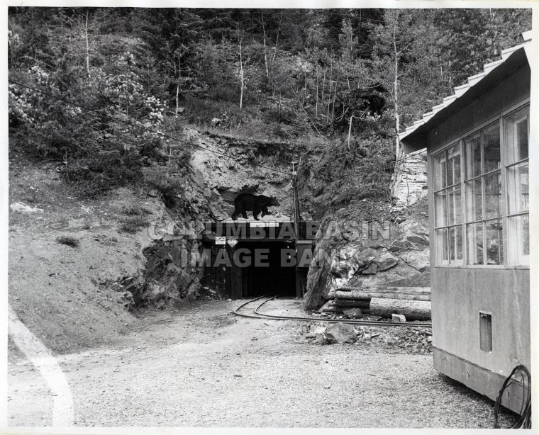 Entrance to the Black Bear tunnel at the Rossland Museum circa 1970