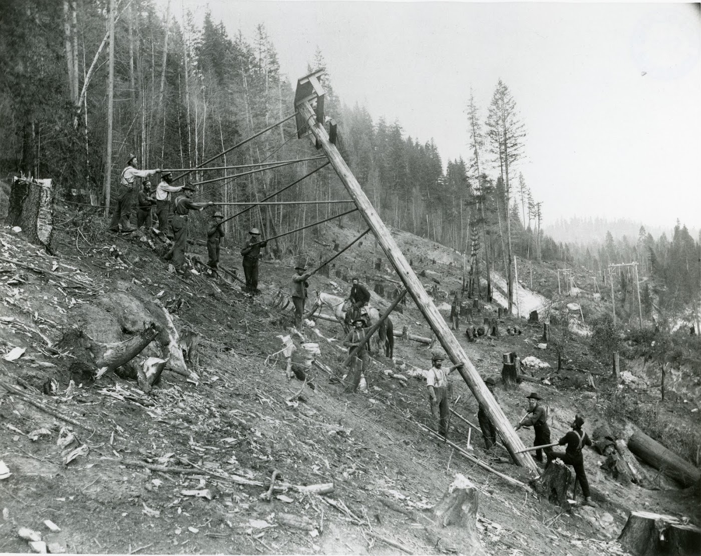 Photo 2318.0047: West Kootenay Power crew raising a power pole for the Bonnington - Rossland line. The crew had to manually cut 50 holes for the poles every 1 km - that's 2,575 holes in total!