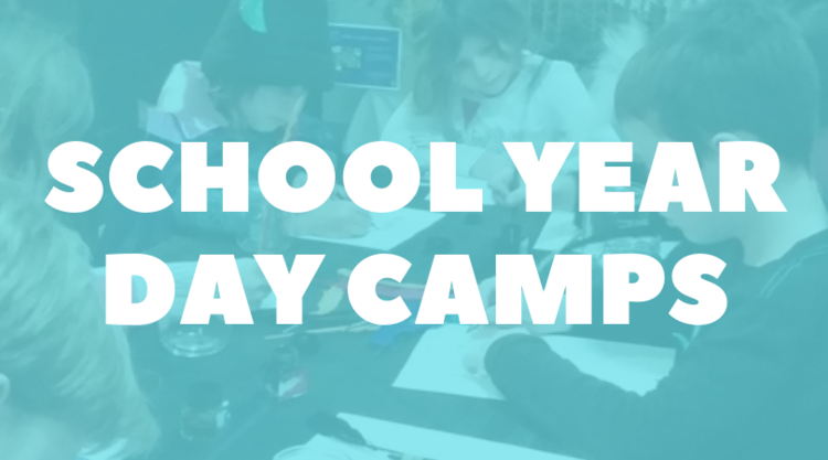 DAY CAMPS WEBSITE BUTTON.png
