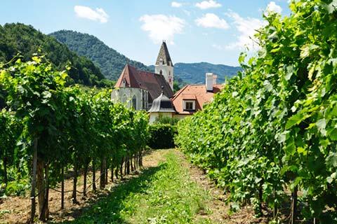 austria_vineyard.jpg