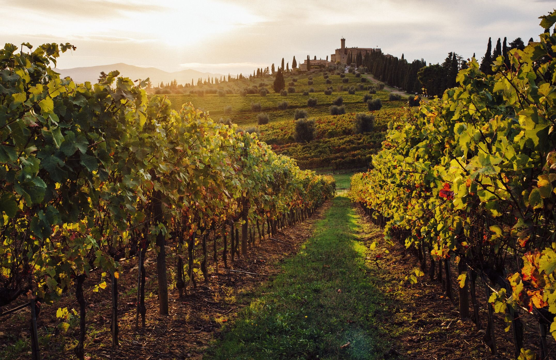 vineyard-in-tuscany-5c298f19c9e77c0001f7e4fc.jpg