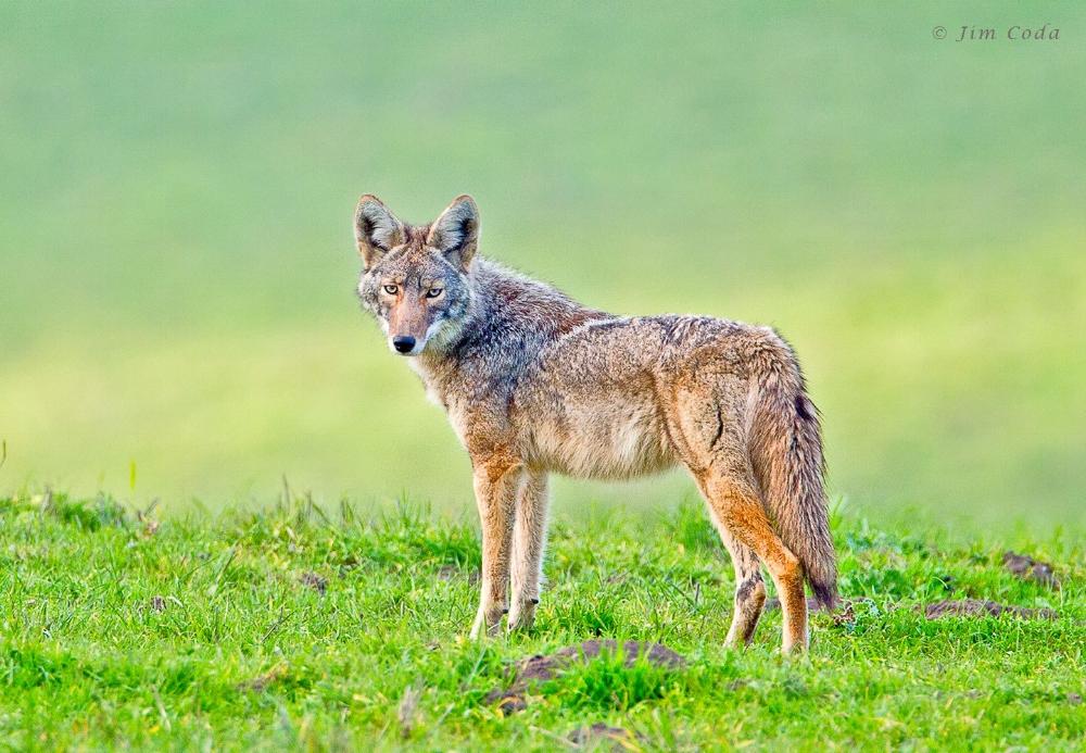 746_1_mg_8535_coyote_point_reyes_national_seashore.jpg