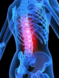 Spinal Column for Chiro PPW.jpg